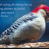 woodpecker image and quote